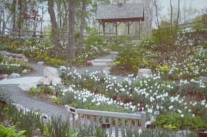 Spring 2013 (11) (1024x682)