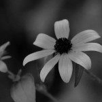 Visible/Black & White